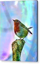 Rainbow Robin Acrylic Print