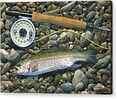 Rainbow Rocks Acrylic Print by Mark Jennings