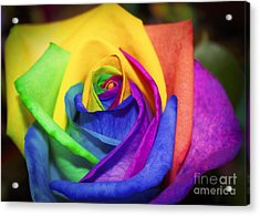 Rainbow Rose In Paint Acrylic Print