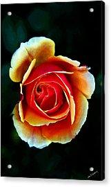 Acrylic Print featuring the photograph Rainbow Rose by John Haldane