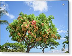 Acrylic Print featuring the photograph Rainbow Shower Tree 1 by Jim Thompson