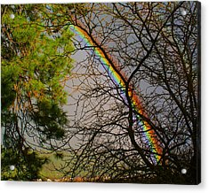 Acrylic Print featuring the photograph Rainbow Tree by Ben Upham III