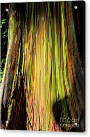 Rainbow Tree Acrylic Print by Jon Burch Photography