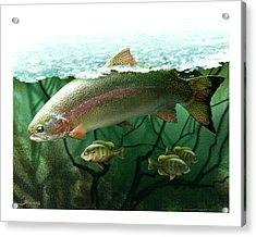 Rainbow Trout Acrylic Print by Jim Thomas