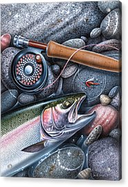 Rainbow Trout Acrylic Print by JQ Licensing