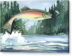 Rainbow Trout Acrylic Print by Paul Brent