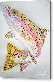 Rainbow Trout Presented In Colored Pencil Acrylic Print by Scott D Van Osdol