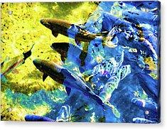 Rainbow Trout Acrylic Print by Sherrie Triest