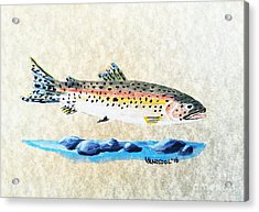Rainbow Trout Watercolor Painting Acrylic Print