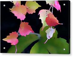 Rainbow Vine Leaves Acrylic Print