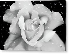 Acrylic Print featuring the photograph Raindrops On Rose Black And White by Jennie Marie Schell