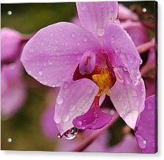 Raindrop Reflections Acrylic Print