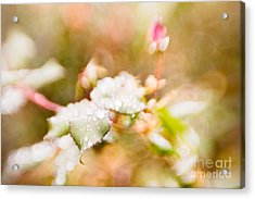 Raindrops Glisten Acrylic Print by Lisa McStamp