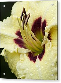 Raindrops On A Petal Acrylic Print