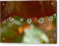 Raindrops On A Red Leaf Acrylic Print by Patricia Strand