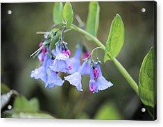 Raindrops On Blue Bells Acrylic Print