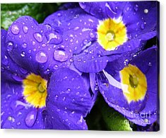 Raindrops On Blue Flowers Acrylic Print by Carol Groenen