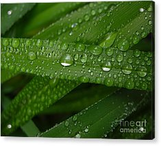 Raindrops On Green Leaves Acrylic Print by Carol Groenen