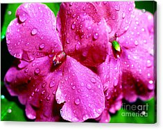 Raindrops On Impatiens Acrylic Print