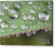 Raindrops On Leaf. Acrylic Print by Kim Tran