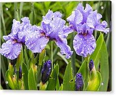 Raindrops On Iris's Acrylic Print by Allan Levin