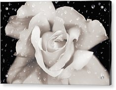 Acrylic Print featuring the photograph Raindrops On Sepia Rose Flower by Jennie Marie Schell