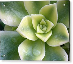 Acrylic Print featuring the photograph Raindrops On The Succulent by Elvira Butler