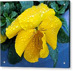 Acrylic Print featuring the photograph Raindrops On Yellow Pansy by E Faithe Lester