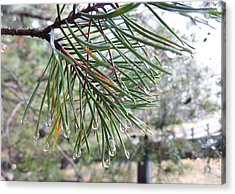 Raindrops Acrylic Print by Rosie Brown