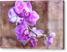 Rained On Acrylic Print by Joan Bertucci