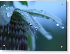 Rainflower Acrylic Print by Linda Russell
