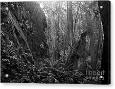 Acrylic Print featuring the photograph Rainforest Black And White by Sharon Talson
