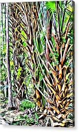 Rainforest Acrylic Print by Carey Chen