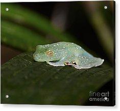 Rainforest Detail.. Acrylic Print by Nina Stavlund