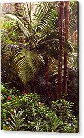 Rainforest Palm Trees  Acrylic Print by Thomas R Fletcher