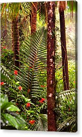 Rainforest Palms And Hibiscus Acrylic Print by Thomas R Fletcher
