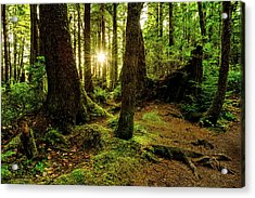 Rainforest Path Acrylic Print by Chad Dutson