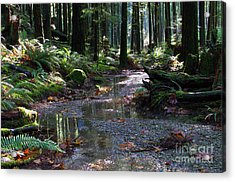 Acrylic Print featuring the photograph Rainforest Trail 2 by Sharon Talson