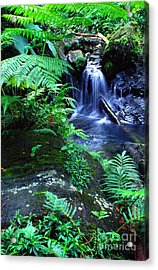 Rainforest Waterfall Acrylic Print by Thomas R Fletcher