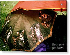 Raining Cats  Acrylic Print by Steven Digman