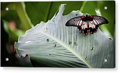 Acrylic Print featuring the photograph Raining Wings by Karen Wiles