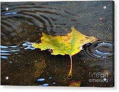 Rainy Acrylic Print by Dan Holm