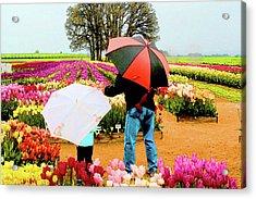 Rainy Day At The Tulip Farm Acrylic Print