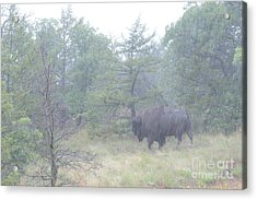 Rainy Day For The Bison Acrylic Print by Tamyra Ayles