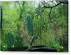 Rainy Day In Central Texas Acrylic Print