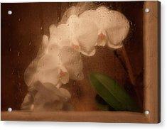 Rainy Day Orchid Acrylic Print by Tom Mc Nemar