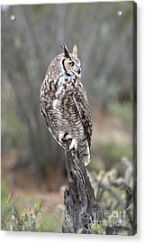 Rainy Day Owl Acrylic Print