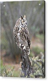 Rainy Day Owl Acrylic Print