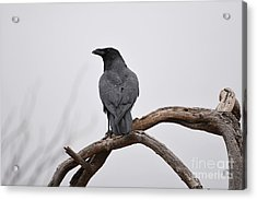Rainy Day Raven Acrylic Print