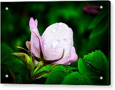 Rainy Day Rose Number 2 Acrylic Print
